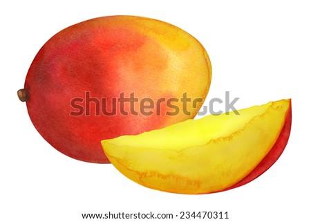 Watercolor mango fruit whole and slice closeup isolated on white background  #234470311