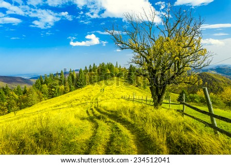Fantastic sunny hills. Carpathian, Ukraine, Europe. Beauty world #234512041