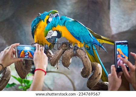 Tourists take pictures Macaw parrots