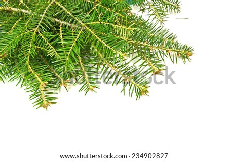 firs branches in white xmas background - space to put your text #234902827