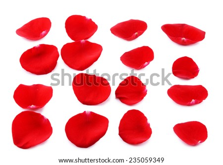 Red rose petals isolated on white #235059349