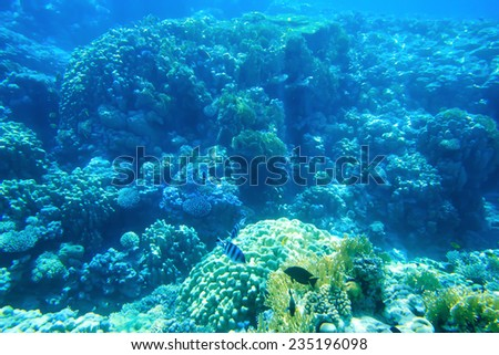 Underwater panorama with fish and coral #235196098