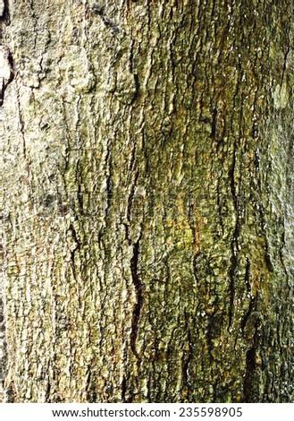 tree bark background #235598905