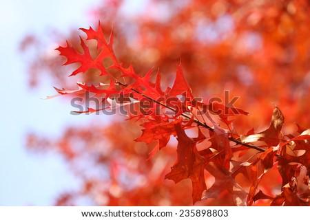 Beautiful autumn leaves #235898803