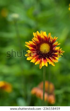 Close up gardenia on blurred background. #236158459