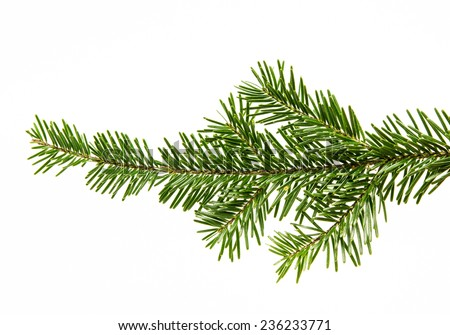 Fir branch isolated on white background #236233771