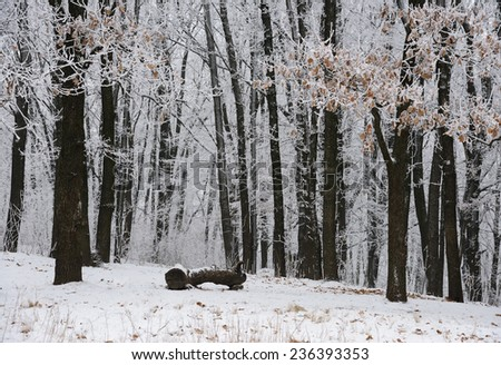 winter forest #236393353