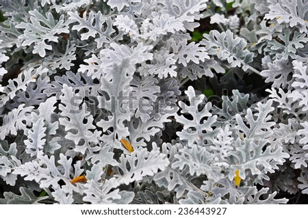 Abstract background with decorative leaves. Colorless image fancy leaves of ornamental plants in the flowerbed. #236443927