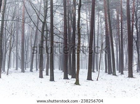 Cold winter day in a frosty foggy forest #238256704