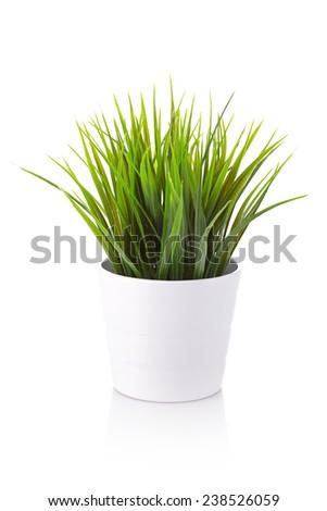 grass #238526059