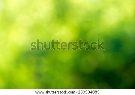 Green blurred background and sunlight Royalty-Free Stock Photo #239504083