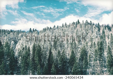 Vintage Photo Of Carpathian Tree Forest Covered With Winter Snow On Blue Sky