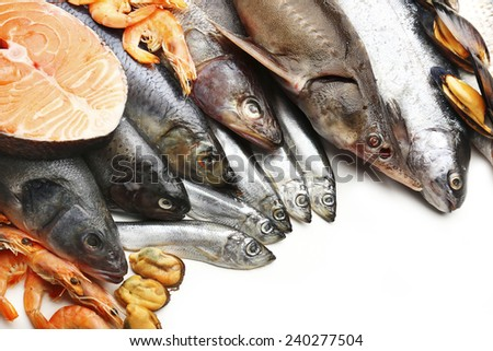 Fresh catch of fish and other seafood close-up #240277504