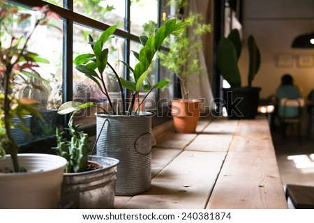 A small plant pot displayed in the window #240381874
