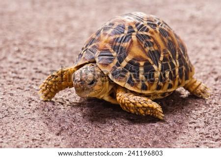 Tortoise closeup #241196803