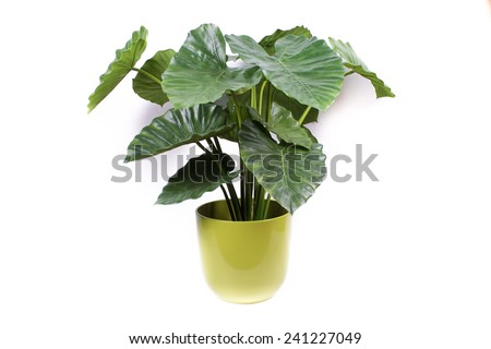 plant in the pot #241227049