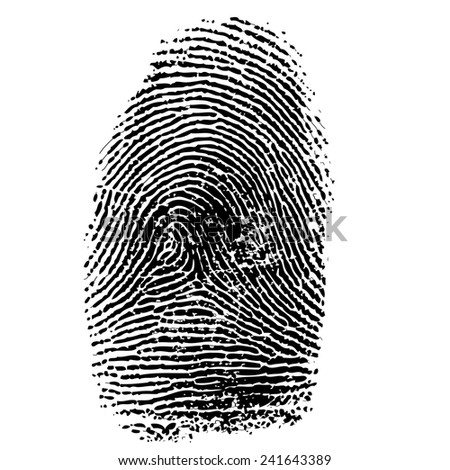 Vector illustration of fingerprint isolated on white #241643389