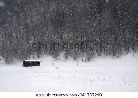 Blizzard winter landscape