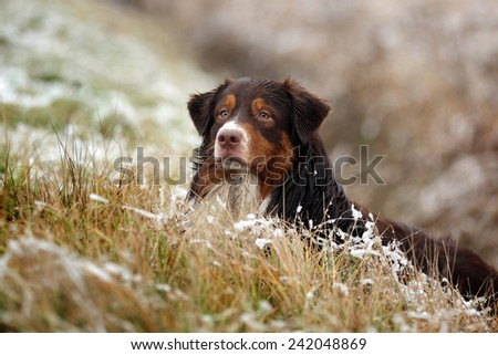 Dog in the snow grass #242048869