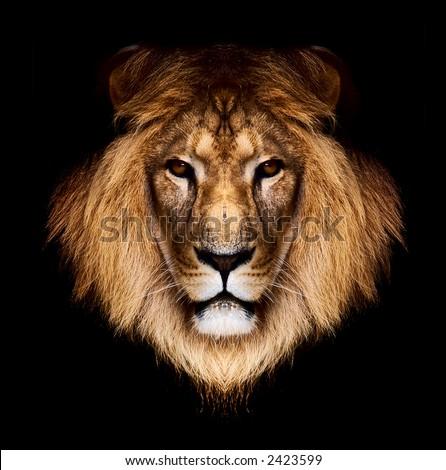 lion #2423599