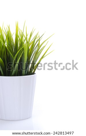 Artificial green plant inside potted, isolated by a white background #242813497