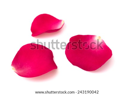 Red petals on white background. #243190042
