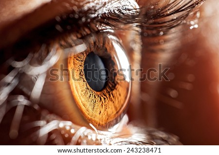 macro eye Royalty-Free Stock Photo #243238471