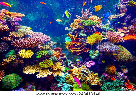 Coral Reef and Tropical Fish in Sunlight. Singapore aquarium #243413140