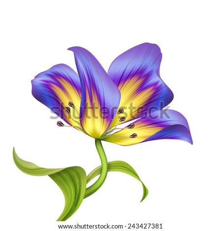 abstract flower illustration isolated on white background, violet tulip design element