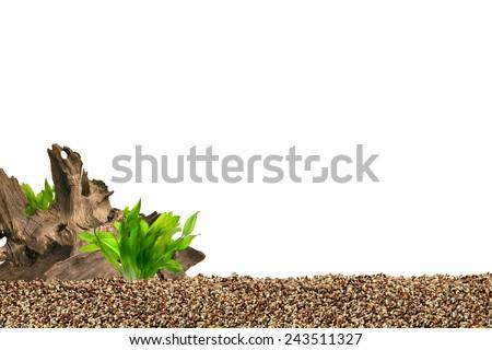 Aquarium background. Driftwood,plant and gravels.