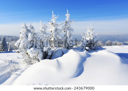 Winter landscape and snow wrapped trees in Sumava, Czech republic #243679000