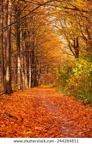autumn forest trees. nature green wood sunlight backgrounds #244284811