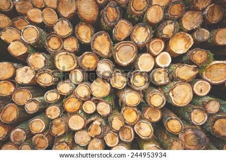 Tree trunks as natural forest background