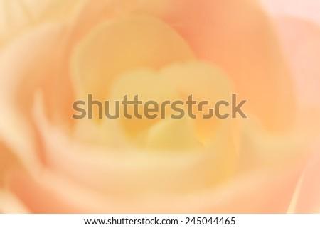 Blurred rose background, pastel color tone #245044465