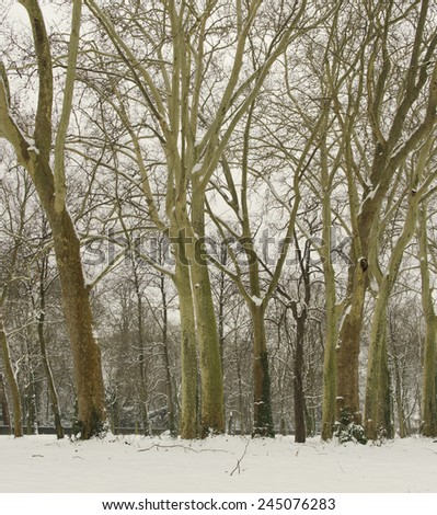 Winter trees in Boulogne forest in Paris #245076283