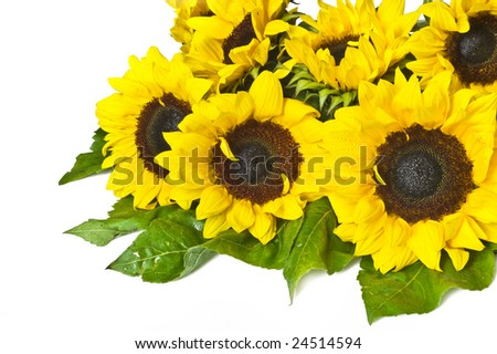 beautiful sunflowers #24514594