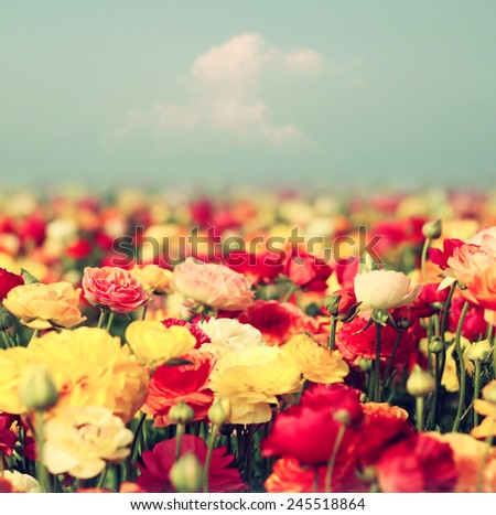 field of flowers, image is vintage style filtered