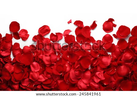 Rose petals on white ground Royalty-Free Stock Photo #245841961