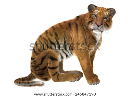 3D digital render of a big cat tiger isolated on white background #245847190