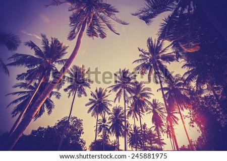 Vintage toned picture of palms silhouettes against sunrise.