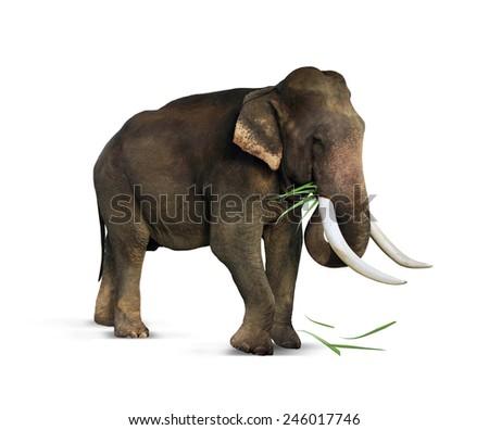 Indian elephant eats grass Royalty-Free Stock Photo #246017746