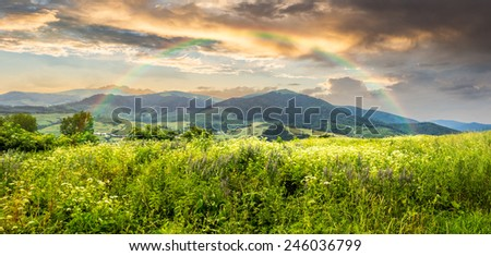 composite mountain landscape. wild flowers on meadow in mountains in morning light with rainbow #246036799
