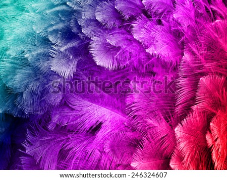 colorful ostrich feather background  #246324607