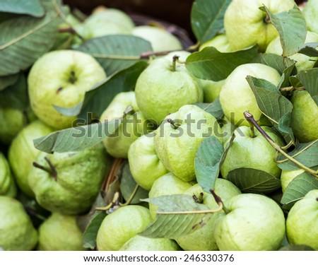guava #246330376