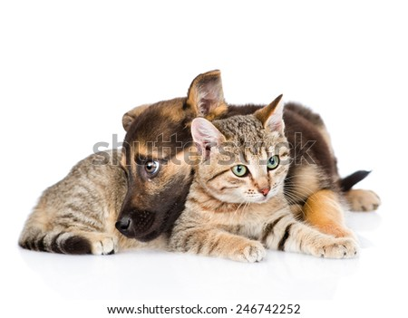 sad dog with cat lying together. isolated on white background #246742252