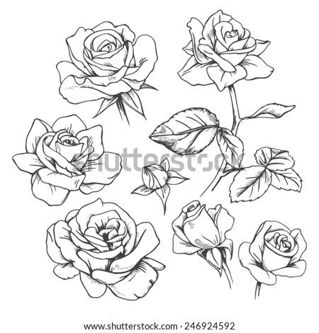 Set of hand-drawn roses.