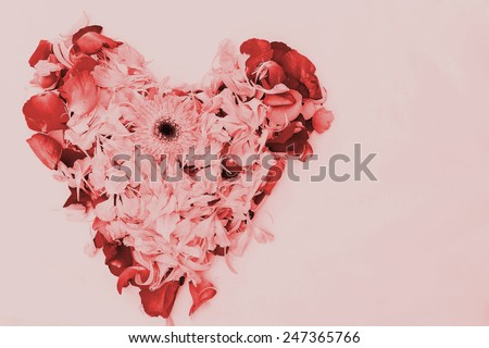 blur style vintage heart pink and red petal flower on white background  #247365766