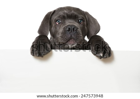Puppy #247573948
