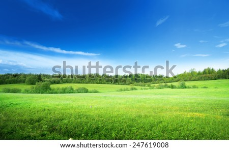 field of grass and perfect sky #247619008