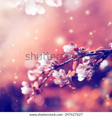 Blossom tree over nature background/ Spring flowers/Spring Background #247627627